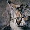 急性副鼻腔炎とは?育児疲れで起こる体の変化