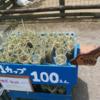 東京ドイツ村でが乾し草が100円で売られていて大人気。商売うまいなーと感動しました。