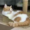 実は、今週わがやに預かり猫さんがやってくる予定でした。
