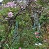 マイ・ビューティフル・ガーデン!! コツコツと造り続けています。