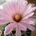 cactuspower サボテン日記