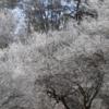 冬枯れの山