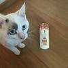 子猫をシャンプーで洗う