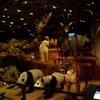 東京旅行:国立科学博物館