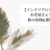 お花屋さんで買える♪秋の枝物&葉物6選!!【インテリアにもおすすめ】