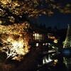 目白庭園の紅葉ライトアップ