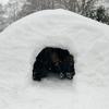 ②元旦はキャンプ場で雪遊び