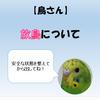 【鳥さん】放鳥について【ながら放鳥や放し飼いは危険!】
