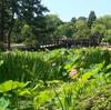 鶴舞公園―紅葉編