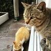 猫達の昔の写真を見ながら…