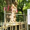 【名古屋】城山八幡宮へ来たら縁結び・良縁祈願の御神木「連理木」で神占をしよう