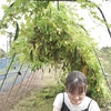 【家庭菜園】ゴーヤを収穫しました