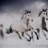 平成最後の「有馬記念」がやって来る。平成の競馬は〇〇と歩んだ30年だった…。