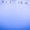 雪が積もる冬の池