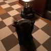 甲斐犬のイメージと甲斐犬サン(´・∀・`)♡ウキャ