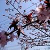春なので、