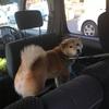週末ドライブと狂犬病予防接種