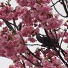 「横浜緋桜」たくさんの★ありがとうございました。
