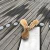 2回目の うさぎ島 大久野島 MAP、海水浴場 神社 展望台