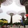 シンガポール街歩き#234(恐竜&スーパーツリー@ガーデンズ・バイ・ザ・ベイ)