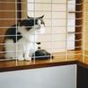 【配膳棚をDIY】キッチンと食卓との往復の際に猫の侵入を気にしないで済むアイディアの紹介