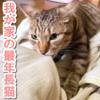 我が家の最年長猫【ぽんず】が、ふみふみ〜もみもみ〜してました!
