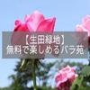 生田緑地園で春を彩るバラを無料で楽しんできました☆