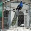 津山城 動物園