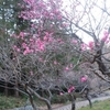 『もうすぐ春ですね』