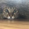 【猫ブログ】サラちゃんが心配