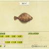 【あつ森】「カレイ(魚)」の出現時期・場所・時間帯情報まとめ【あつまれどうぶつの森】