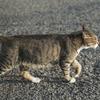 8月後半の #ねこ #cat #猫 その2