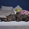 猫とソファーとタオルラックと重い腰