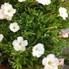 今日の花と収穫