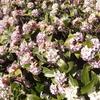 沈丁花 1棟の手前に咲いています!