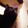 今日の黒猫モモ&白黒猫ナナの動画ー702