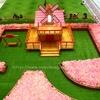 <香港:荃灣>愉景新城D Park「粉紅芒草園」 ~気分だけ台湾!ピンクのすすきが香港に~
