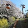 多摩川桜百景 -19. よみうりランド-