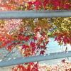被災地の秋・冬は長くなりそう・・・