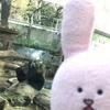 スキウサギの旅⑨上野動物園その2、シンシンと