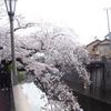 板橋の桜を満喫しました、その2。