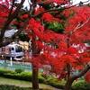 横須賀線E217系 円覚寺の紅葉
