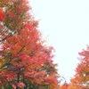 紅葉は混雑を避けます。 #kyoto  #紅葉 #おでかけ #寺社