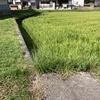 畔の稲刈りをしました♪暑い時の空調服と工進のバッテリー式草刈機のおかげでささっと終了♪稲も順調に育って楽しみです( ^∀^)