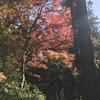 鎌倉の紅葉~寒さ対策も~