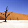 砂漠に立てる意識