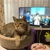 プーチンさん高市早苗さん応援猫になるฅ(^ •ω• ^)ฅ