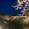 福岡城 さくらまつり 2017