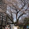 TOKYO 街歩き~桜シーズンの巻~