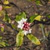 駐車場の隅っこでひっそりと咲く沈丁花